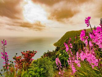 Bild mit Blumen, Meerblick, Meer, Natur/Landschaften