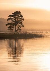 Bild mit Bäume, Seen, Sonnenuntergang, Nadelbaum