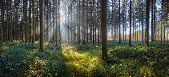 Bild mit Grün, Bäume, Sonne, Wald, Panorama, Licht, Ruhe, Sonnenstrahlen