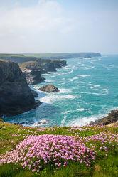 Bild mit Natur, Wasser, Gewässer, Seen, Blumen, Frühling, Meere, Strände, Strand, Meer, Blume, Nature, See, Küste, küsten