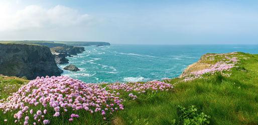 Bild mit Natur, Grün, Blumen, Rosa, England, Meer, Küste, Blüten, pink, Cornwall, weite