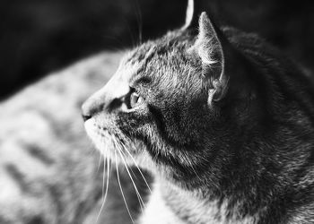 Katze Schwarz WeiÃ?