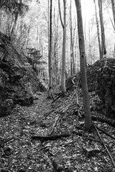 Bild mit Natur, Laubbäume, Wald, Laubbaum, schwarz weiß, Laub, Naturfoto