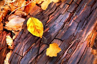 Bild mit Holz, Herbst, Holzstruktur, Blätter, Blatt