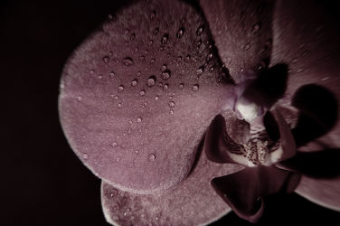 dark flower 2 reloaded