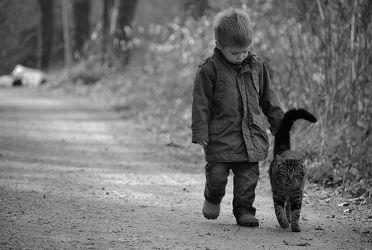kid & the cat
