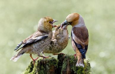 Fütterung