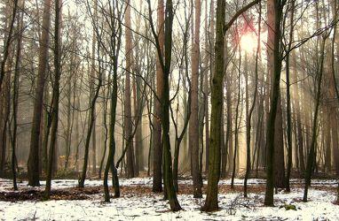 Bild mit Natur, Bäume, Winter, Wälder, Sonne, Wald, Baum, Märchenwald, Sonnenstrahlen, Winterwald