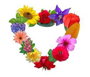 Bild mit Pflanzen, Blumen, Rosen, Sonnenblumen, Blume, Pflanze, Rose, Tulpe, Tulpen, romantik, Sonnenblume, Margeriten, Margerite, Flora, cosmea, Blüten, Florales, Florales, blüte, Freundschaft, romantisch, Herz, Liebe, dekorativ, Dekoration, Akelei, lampions, lampion, verliebt, herzlich