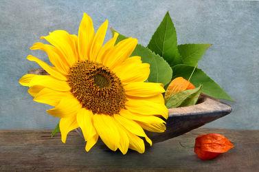 Bilder mit Floral