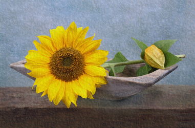 Bild mit Sonnenblumen,Blume,Sonnenblume,Floral