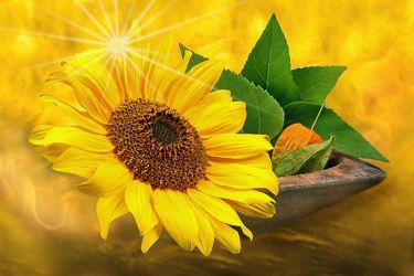 Bild mit Pflanzen, Himmel, Wolken, Blumen, Sonne, Blätter, Blume, Pflanze, Sonnenblume, Blatt, Floral, Florales, Wellness, Sterne, weich, soft, stern