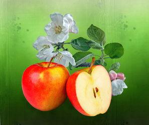 Bild mit Früchte, Frucht, Obst, Nahrung, Apfel, Apfel, Blüten, blüte, Apfelblüte, Ernährung, apfelblüten
