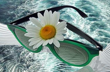 Bild mit Wasser, Gewässer, Blumen, Urlaub, Sommer, Meer, Blume, See, Margeriten, Margerite, Floral, Blüten, Florales, blüte, brille, sonnenbrille