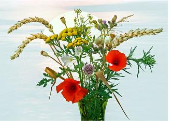Bild mit Pflanzen, Blumen, Getreide, Mohn, Sonne, Blume, Pflanze, Blumenstrauß, Floral, Blüten, Florales, blüte, vase