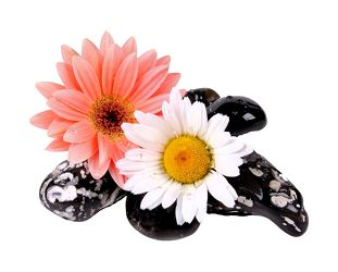 Bild mit Blumen, Stein, Steine, Blume, Margeriten, Margerite, Floral, Stilleben, Blüten, Florales, Wellness, blüte