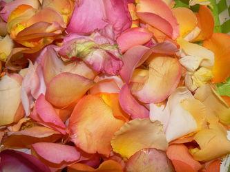bunte rosenblätter