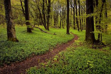 Bild mit Landschaften,Bäume,Wälder,Wege,Wald,Baum,Weg,Landschaft,Buchenwald,pfad,pfade