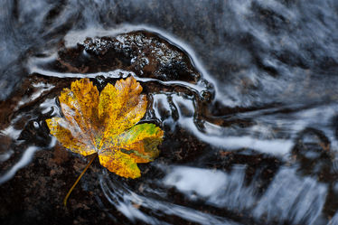 Bild mit Natur, Wasser, Flüsse, Blatt, Fluss