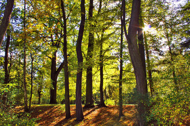 Laubbaum Wald