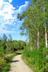 Bild mit Birke, Weg, Waldrand, Wanderweg, landscape, Radweg, Birken Landschaft