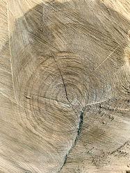Bild mit Holz, Struktur, Baumstamm, Jahresringe, Holzstruktur, Windriss, Holzscheibe, Eiche, Eichenholz, wood