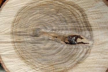 Bild mit Holz, Struktur, Baumstamm, Jahresringe, Holzstruktur, Eiche, Eichenholz, rustikal, brennholz, feuerholz