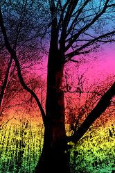 Bild mit Natur, Bäume, Wald, Baum, Waldblick, Forest, Abstrakte Kunst, Bunt, mystisch