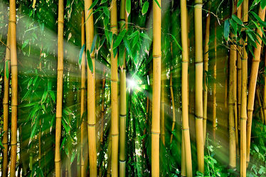 Bambus Dschungel