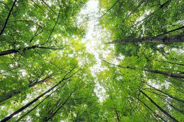 Bild mit Natur, Bäume, Wälder, Laubbäume, Wald, Baumkrone, Baum, Landschaft, Forest, Laubbaum, Baumkronen