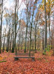 Bild mit Natur, Herbst, Wald, Landschaft, Waldblick, Wanderweg, Bank, Wäldchen, Buche, Jahreszeit, Parkbank