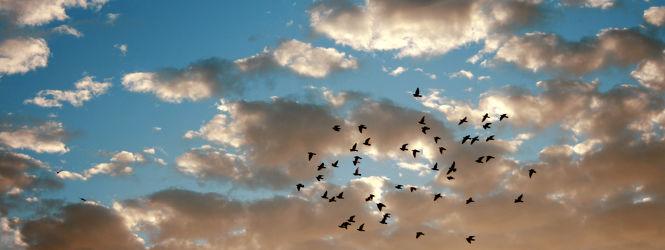 Bild mit Himmel, Wolken, Vögel, Panorama, Wolkenhimmel, Sky, Wolkenhimmel Panorama, Sky & Clouds, Wolke, Tauben