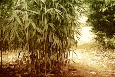 Bild mit Natur, Pflanzen, Bambus, Pflanze, Wellness, bambuswald, bambusstangen, bambusrohr, bambuspflanze, Bambusblatt, Bambusblätter