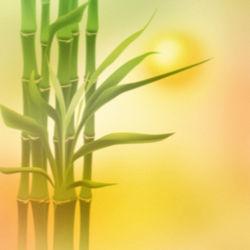 Bild mit Bambus