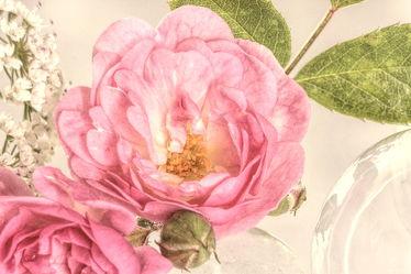 Bild mit Pflanzen, Blumen, Rosen, Blume, Pflanze, Rose, Blüten, VINTAGE
