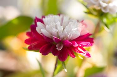 Bild mit Natur, Pflanzen, Blumen, Blume, Flora, Blüten, Makroaufnahmen, blüte, fototapete, wandschmuck, Blumengarten, Sommerblümchen, Raumdesign