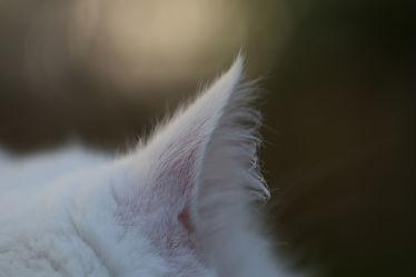 Bild mit Tier,Katze,Katzenohr