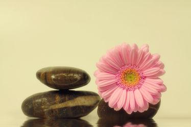 Bild mit Blumen, Gerberas, Steine, Blume, Gerbera, Wassertropfen, Wasserperlen, Ruhe, Tropfen, Blüten, Wellness, blüte