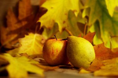 Bild mit Lebensmittel, Herbst, Herbst, Obst, Birne, Birnen, Küchenbild, Apfel, Stillleben, Food, Küchenbilder, KITCHEN, frisch, Küche, Küchen, tomatos, Erntedank, Kochbild, Erntedankzeit