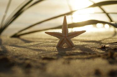Stern des Südens Verträumtes Bild vom Meer