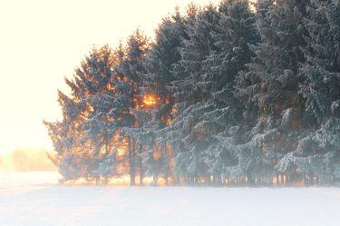 Bild mit Natur, Landschaften, Bäume, Winter, Schnee, Wälder, Sonnenuntergang, Sonnenaufgang, Wald, Baum, Landschaft, Weihnachten, winterlandschaft, Winterlandschaften, Winterbilder, Kälte, Frost, Winterbild, winterwunder