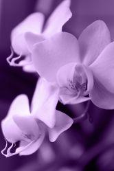 Bild mit Orchideen