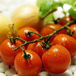 Tomaten, Basilikum und Zwiebel