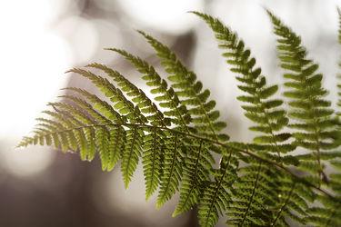 Bild mit Natur,Bäume,Herbst,Sonnenuntergang,Wald,Wald,Licht,farn,romantisch