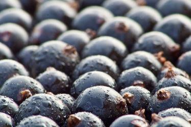 Bild mit Früchte,Lebensmittel,Beeren,Obst,Küchenbild,KITCHEN,Küche,Johannisbeeren