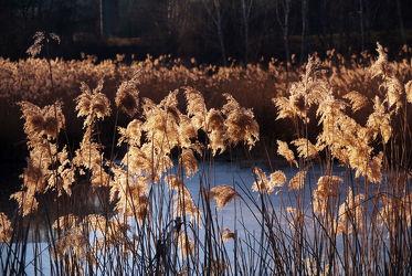 Bild mit Natur, Gräser, Winter, Sonnenuntergang, Tageslicht, Sonnenaufgang, Schilf, Gras, Wiesengras, Schilfgras, See