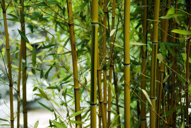 Bild mit Bambus, Tapeten, ASIATISCH, Bambusblatt, Bambusblätter, fototapeten, vliestapeten, motivtapete