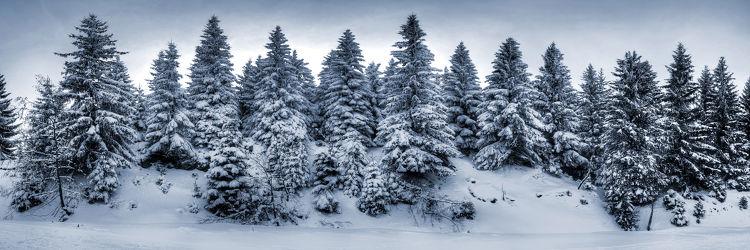 Bild mit Landschaften, Nadelbäume, Winter, Schnee, Landschaft, Weihnachten, winterlandschaft, Winterlandschaften, Harz, Kälte, Frost, winterwunder