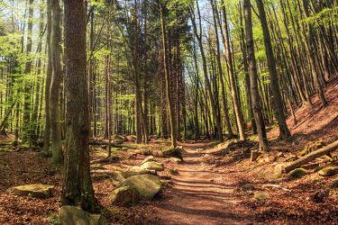 Bild mit Natur, Bäume, Wälder, Felsen, Frühling, Wege, Wald, Baum, Weg, Waldweg, Elfen, Harz, frühjahr, Ilsetal, Feenland, Elfenland, feen