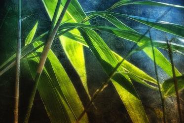 Bild mit Pflanzen, Bambus, bamboo, Pflanze, Meditation, Wellness, bambuswald, bambusstangen, bambusrohr, bambuspflanze, Bambusblatt, Bambusblätter